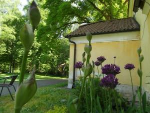 Zahrada - Pension Fořtovna v Písku, Ubytování Fořtovna Cerhonice