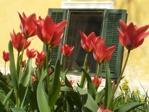 Zahrada - Pension Fořtovna v Písku, Ubytování Fořtovna Cerhonice, Okolí Písku