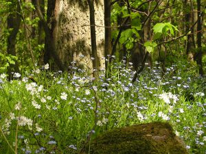 les-v-okolí-penzionu-Fořtovna-Písecko-jižní-Čechy