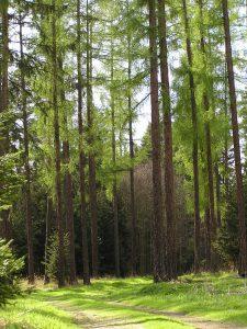 lesy-v-okolí-penzionu-Fořtovna-Písecko-jižní-Čechy