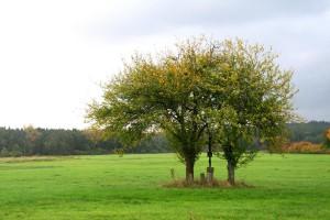 v lukách okolí penzionu Fořtovna, Písecko, jižní Čechy